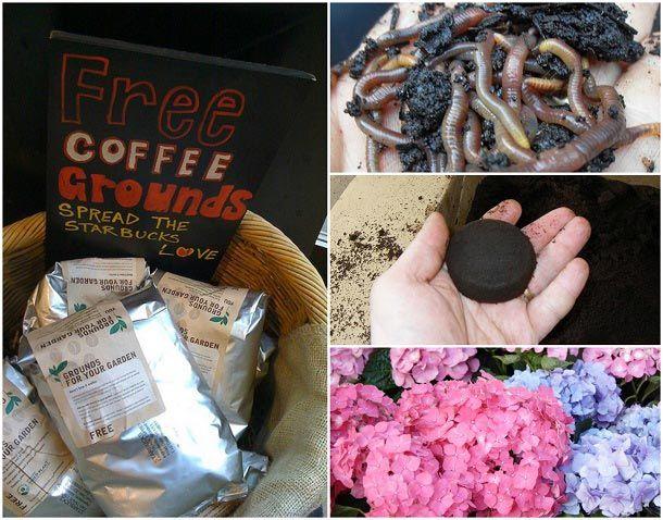 10 Genius sätt att använda gamla kaffesump i din trädgård