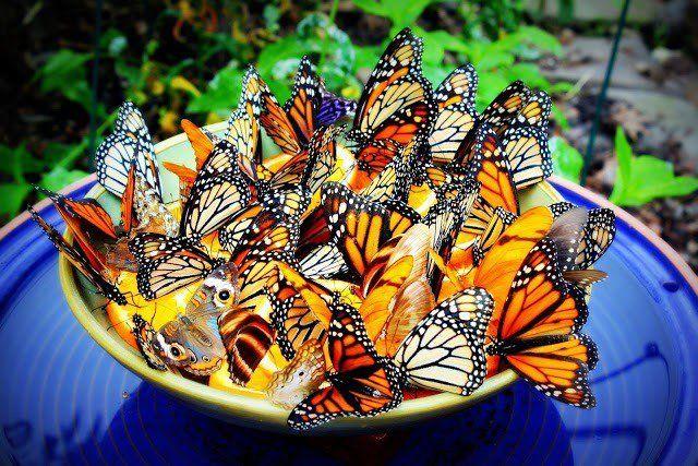 14 Vackra diy fjäril matare att göra din trädgård en fjäril paradis