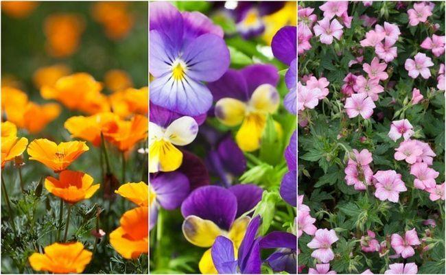 18 enklaste och mest vackra blommor vem som helst kan växa i sin trädgård