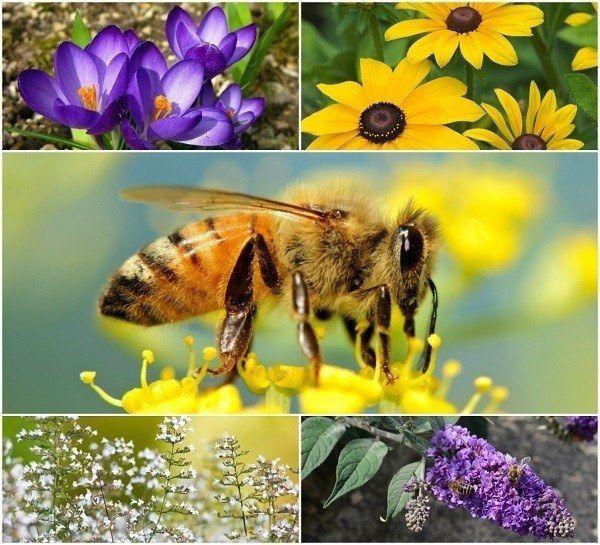 20 Vackra blommor för att locka bin till din trädgård