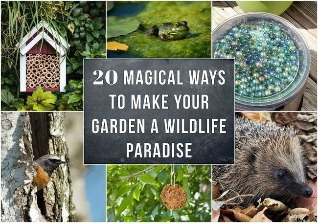 20 magiska sätt att göra din trädgård ett vilt paradis