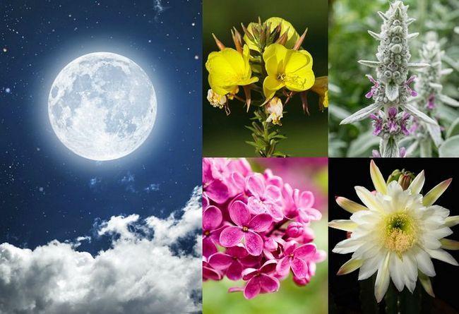 20 växterna att växa i din moonlight trädgård
