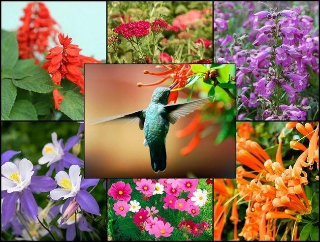 21 Glorious trädgårdsväxter som lockar kolibrier