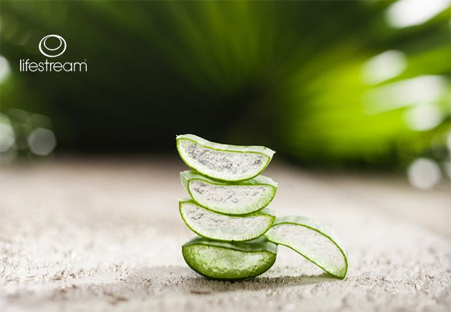 5 hälsofördelar med Aloe Vera