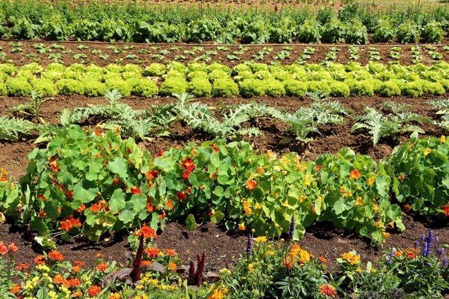 5 Snabb knep för att avsevärt öka din trädgård ger