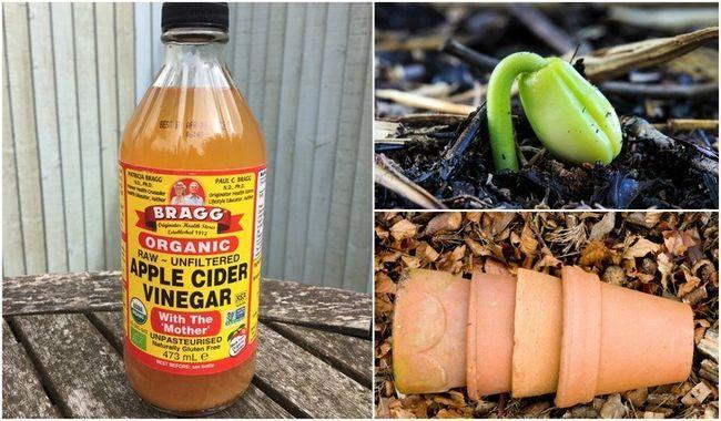 6 Brilliant användningsområden för äppelcidervinäger i trädgården