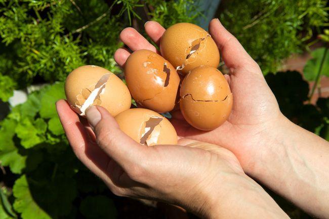6 Övertygande skäl bör du börja använda äggskal i din trädgård