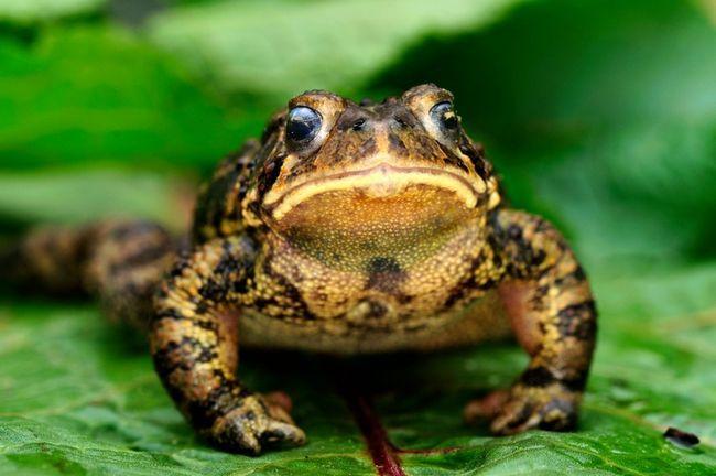 9 sätt att locka grodor och paddor till din trädgård