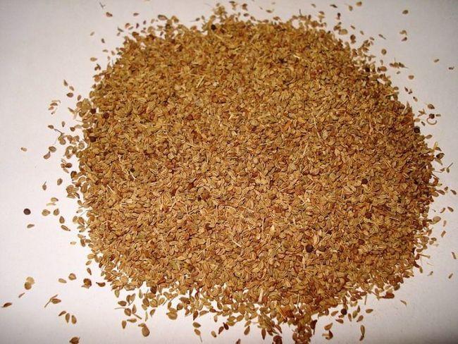 Fantastisk hälsofördelar, använder och biverkningar av ajwain (carrom utsäde) som du bör veta
