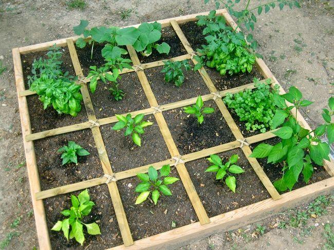 Hur man planerar en kvadratfot köksträdgård - det enklaste sättet att växa rikligt veg