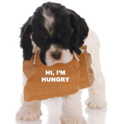 Hur platsen falska mat cravings